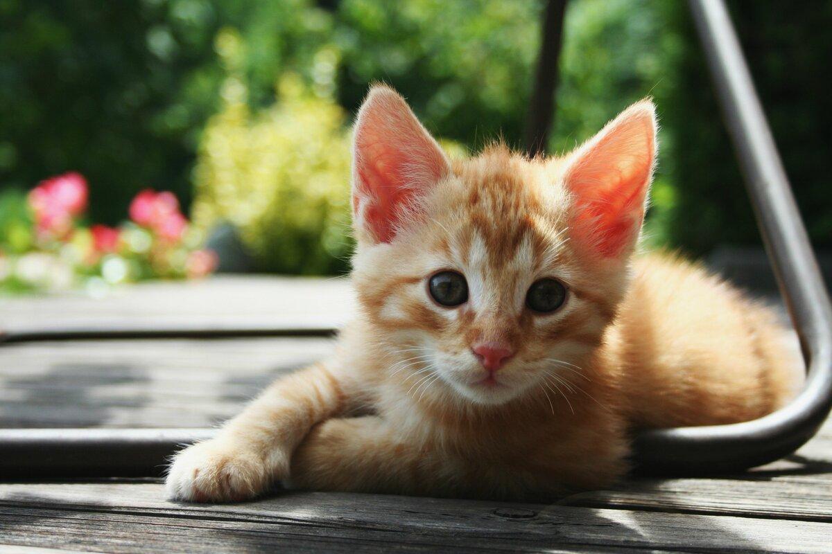 Днем, картинки рыжие котята