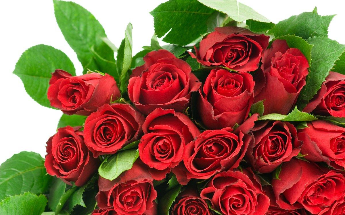 Для бабушки, картинки цветы с юбилеем 55 лет