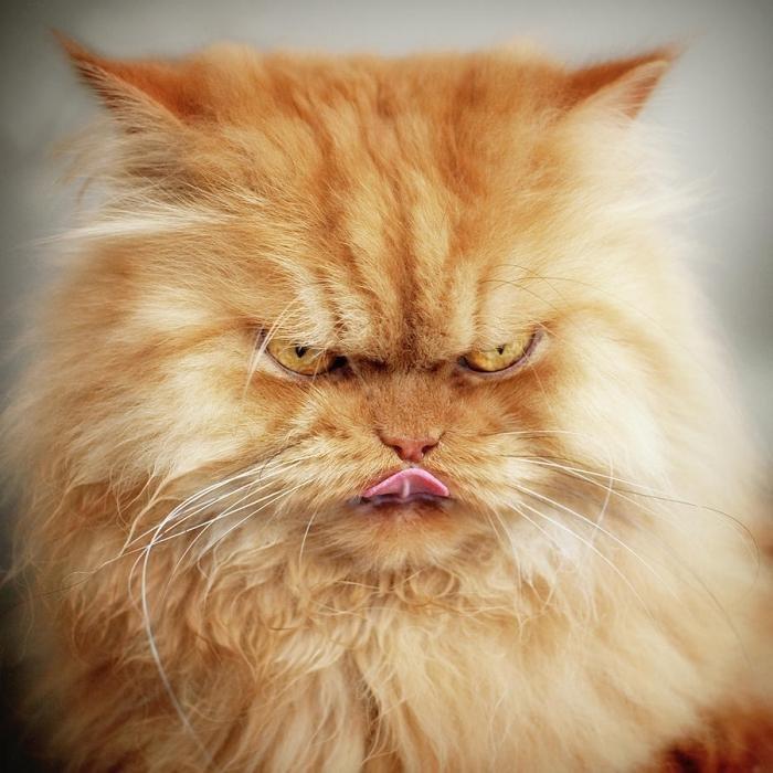 Телевизоре, открытки злые кошки