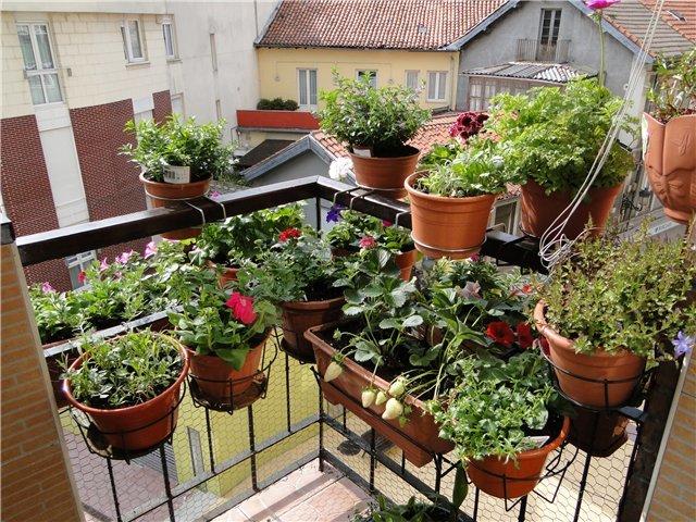 """Комнатные цветы летом на балконе"""" - карточка пользователя po."""