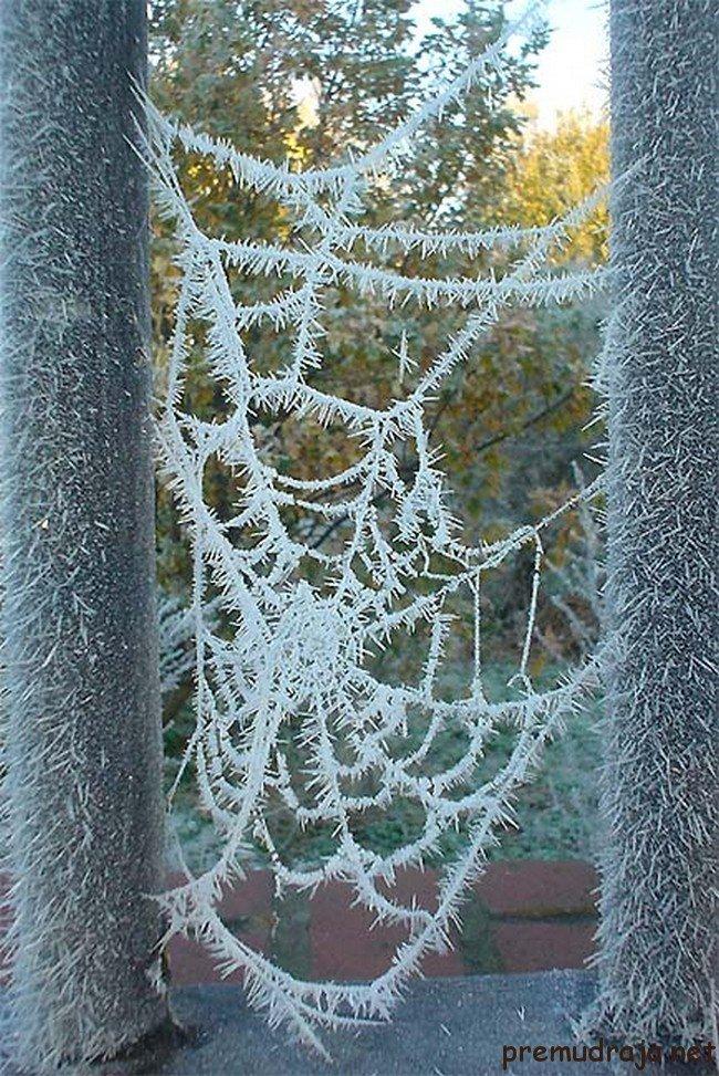 Зимний стокгольм фото ногтей акриловой