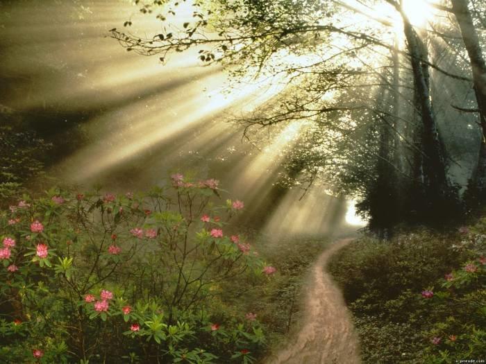 Лучи солнца в лесу.
