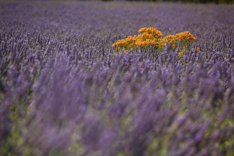 Сорняки с фиолетовыми цветами 73