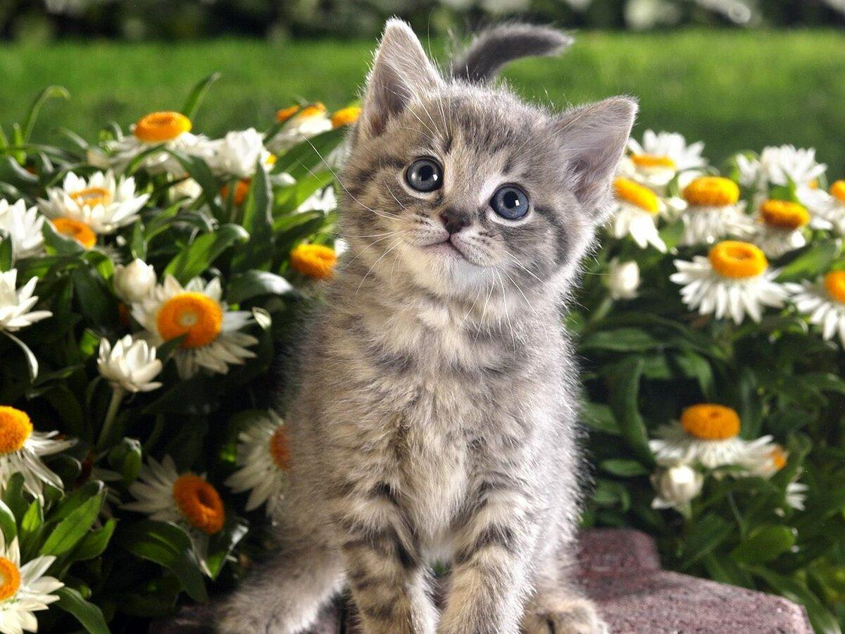 Цветы и животные картинки, днем рождения для