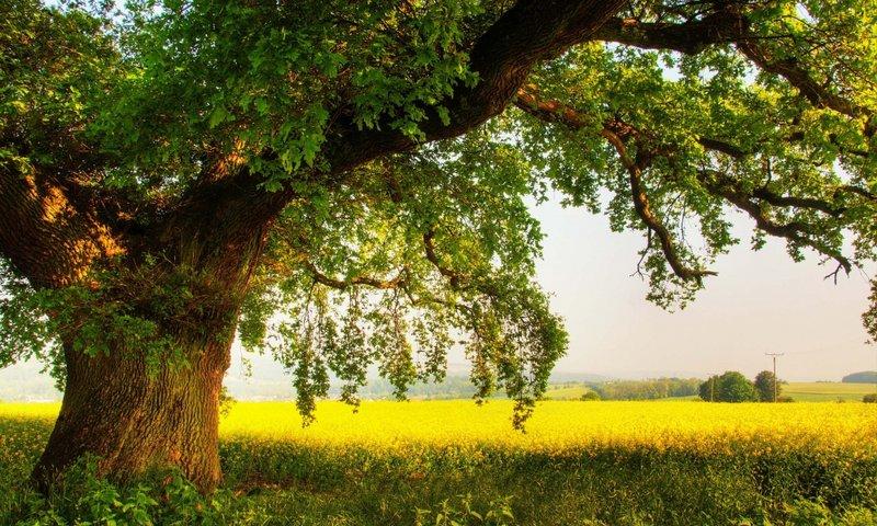 Фото красивая вика на природе фото 12-905