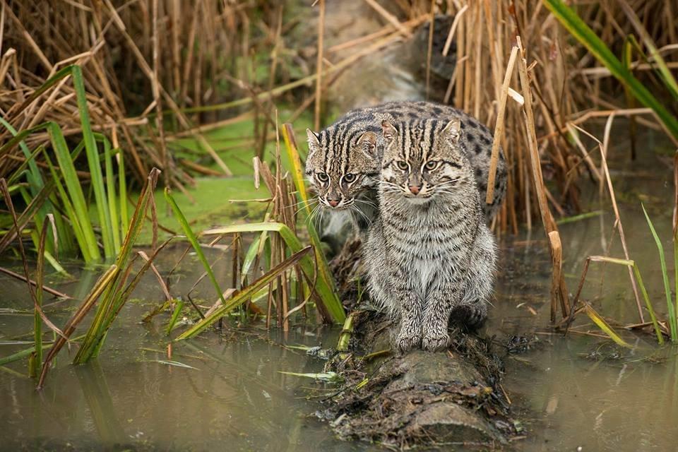 кошка рыболов фото одежда сразу