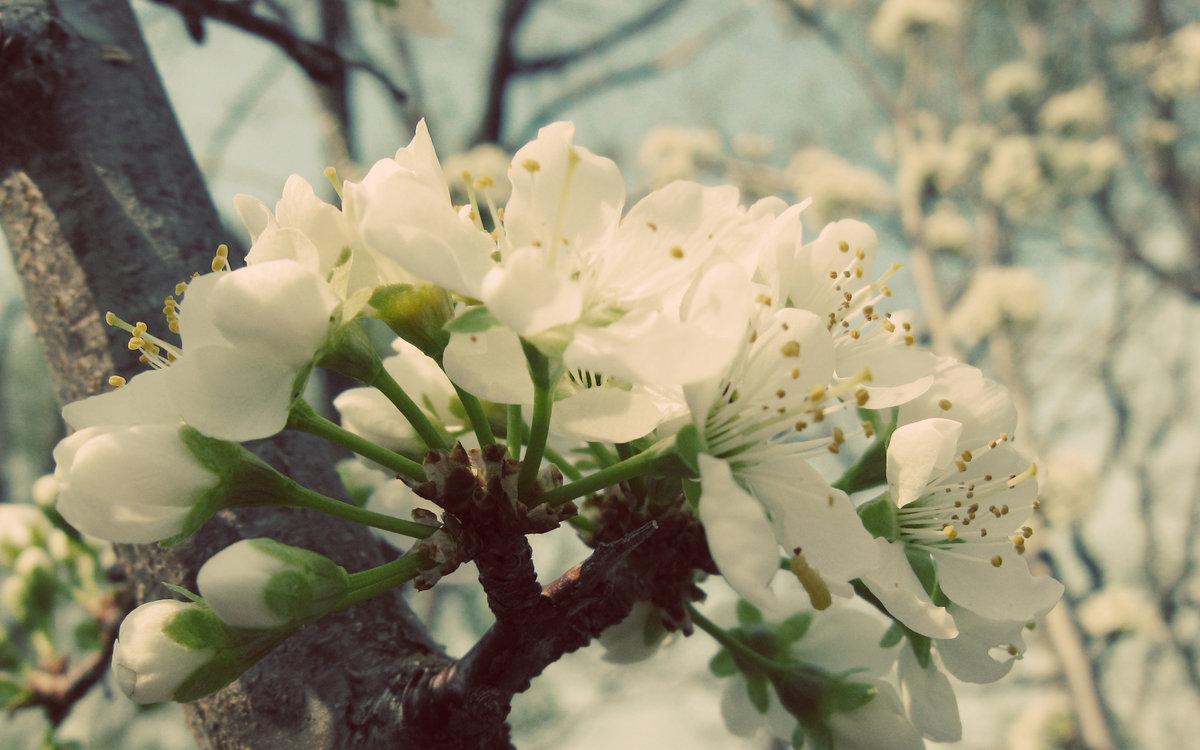 композиция, большие картинки весна на весь экран благодаря