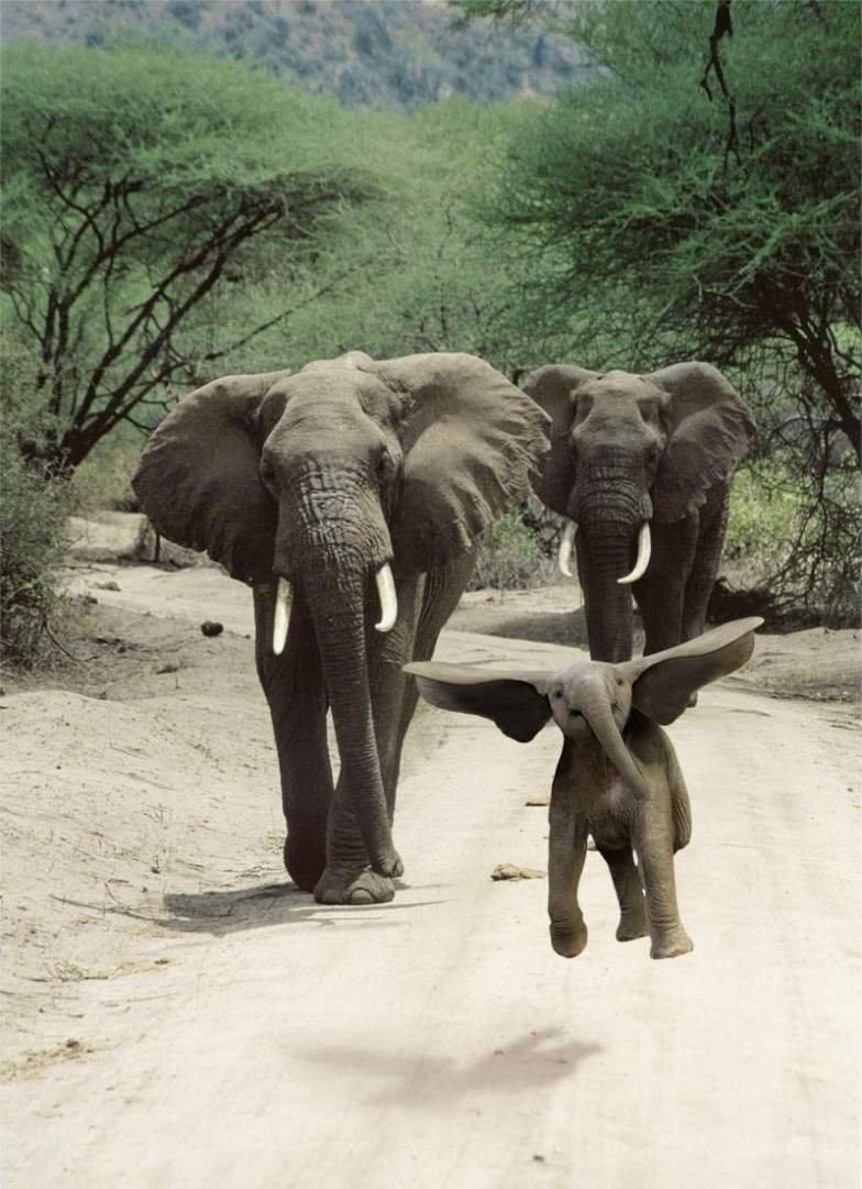 Картинки смешные со слонами, неба
