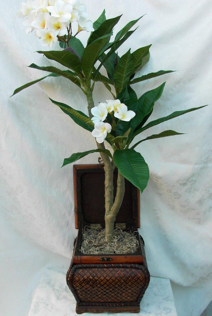 Растение плюмерия купить в москве