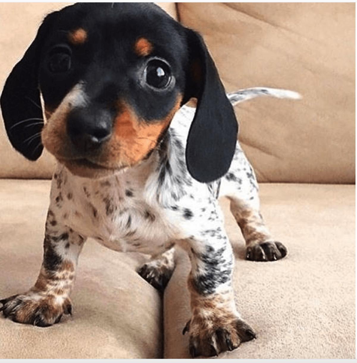 Разные картинки собак пород