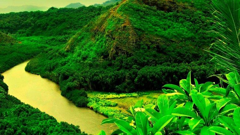 Лес природа фото