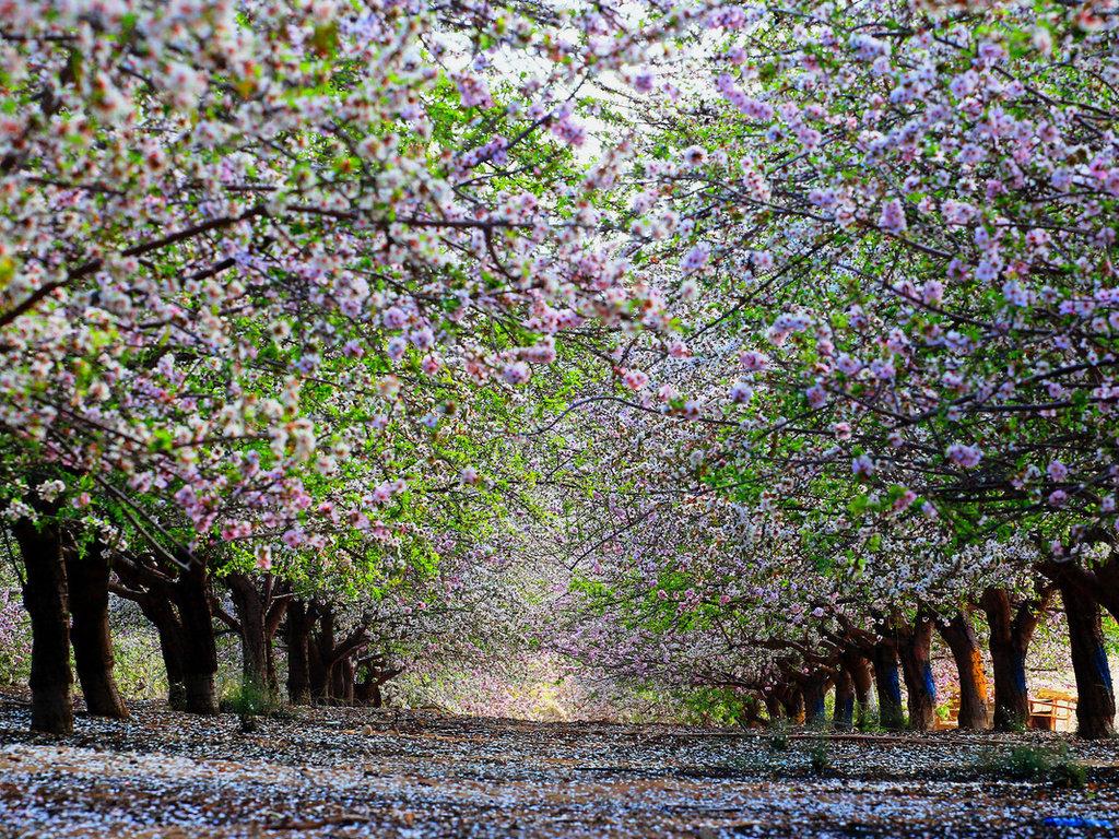 картинки когда цветут сады выбирайте