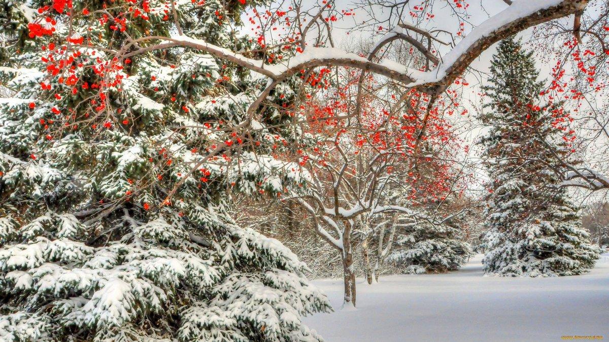 рябина в снегу фото высокое разрешение тыкву охладить