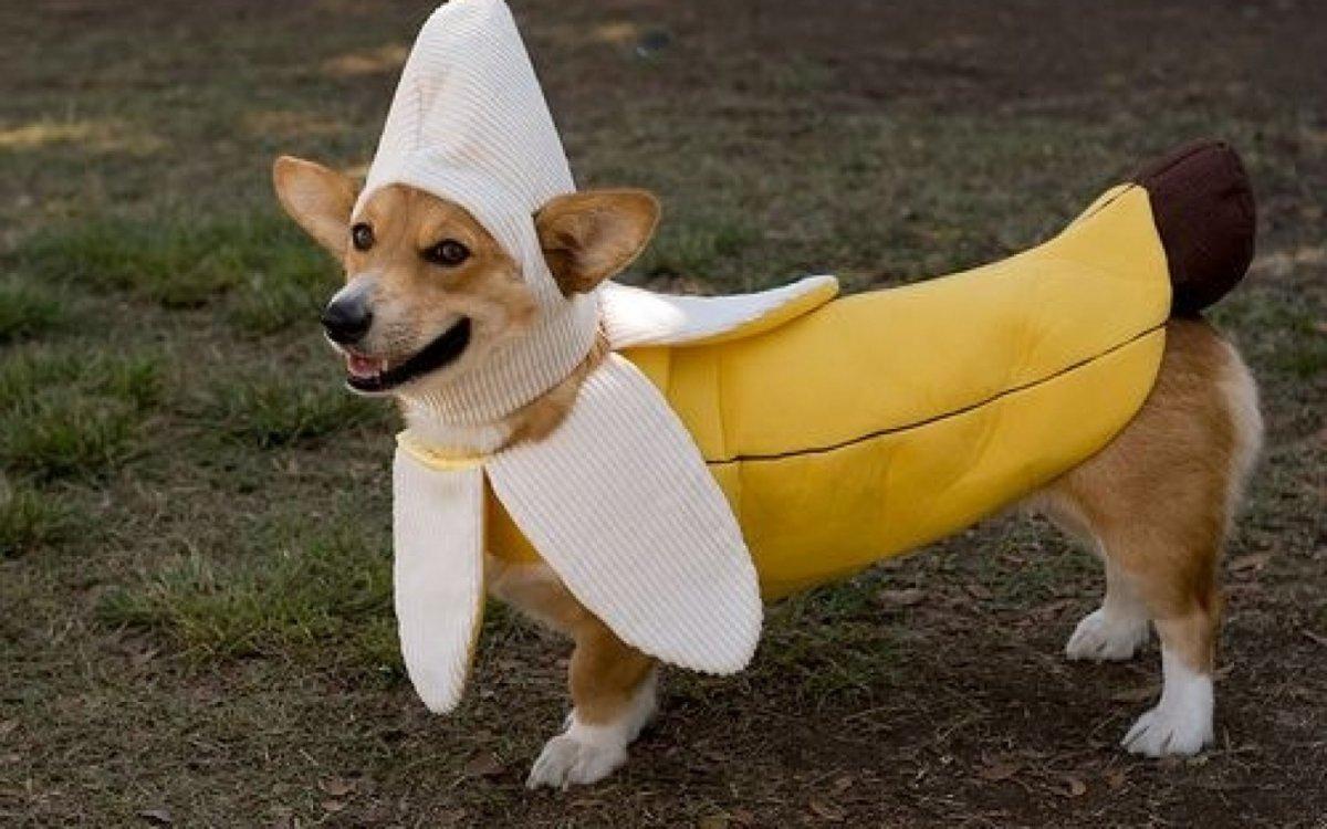 funny dog costumes - 1200×750