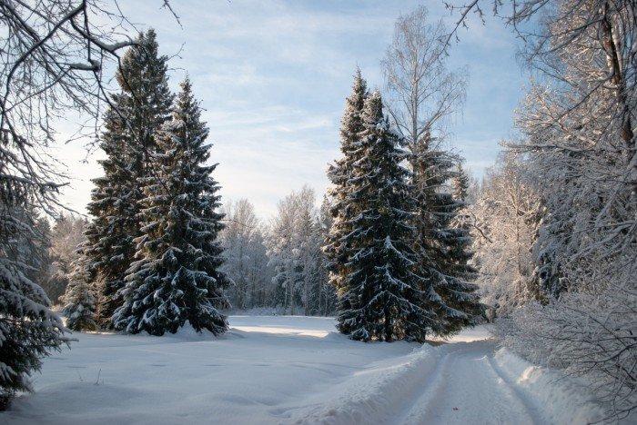 Зимой и летом одним цветом - Узнавайка