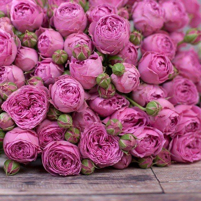 пионные розы фото функциональная комфортная