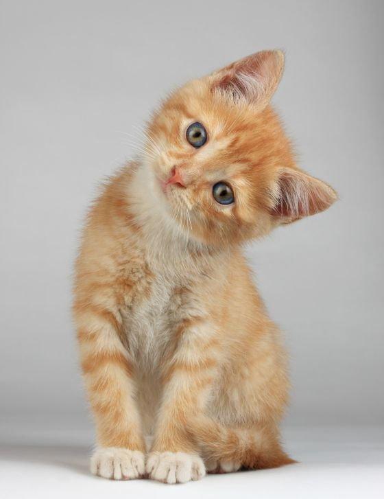 Айди картинки котика