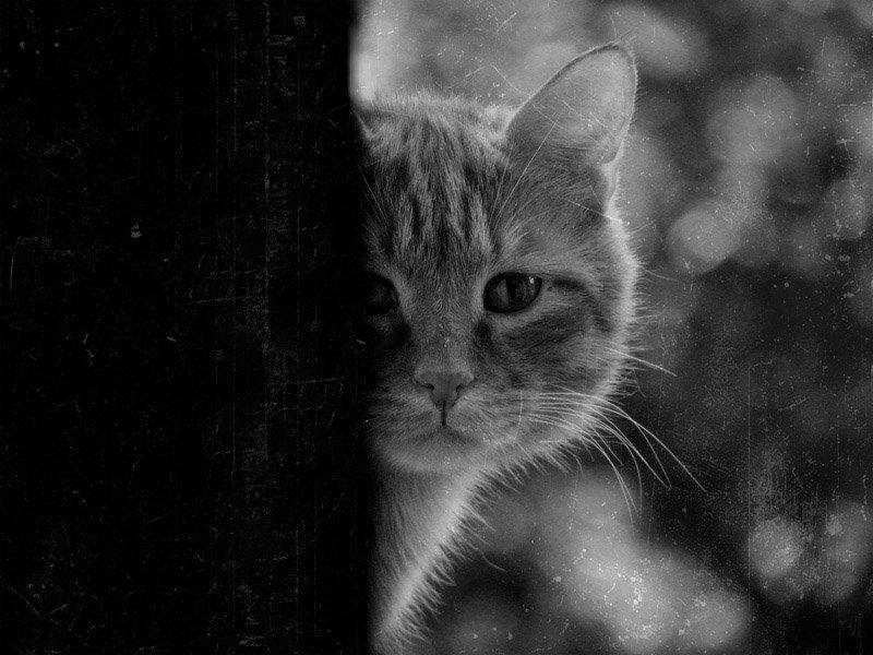 Дню, картинки животных с грустными надписями