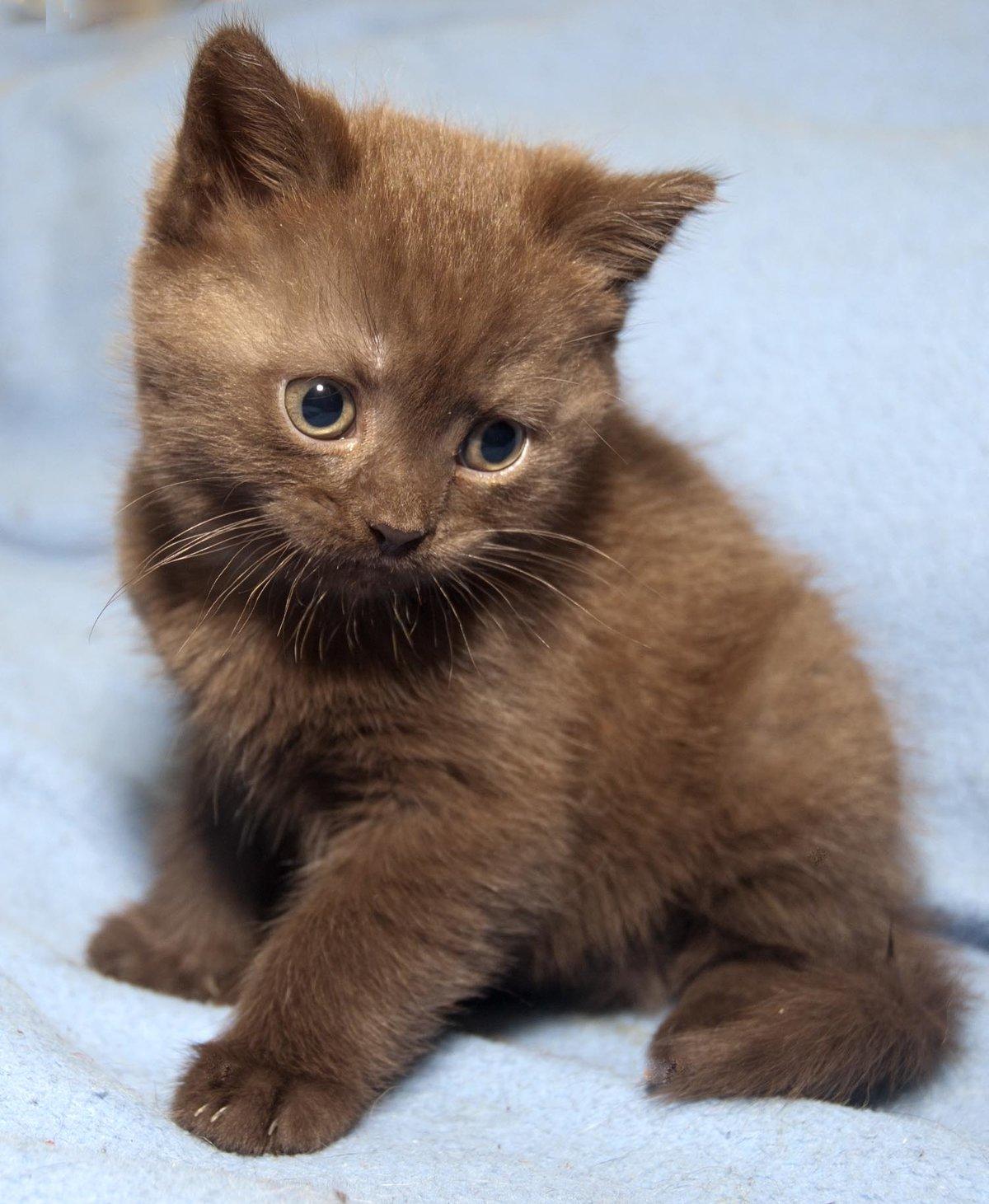 памятники картинки шоколадные кошки нужно говорить