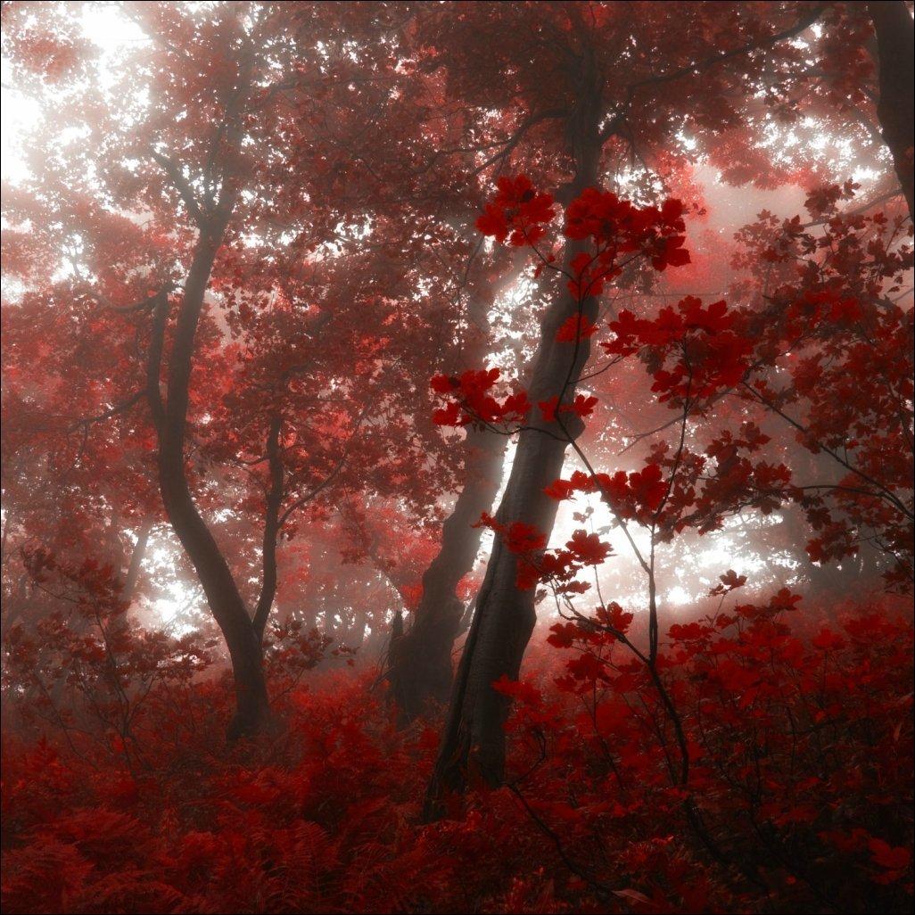 Сказочный лес чешского фотографа