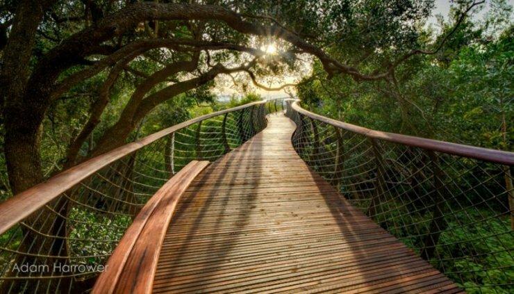 Новый изогнутый мост, построенный из стали и дерева мост Canopy Walkway тянется через весь парк над вершинами деревьев. На создание моста такого вида, архитекторы были вдохновлены  скелетом змеи,