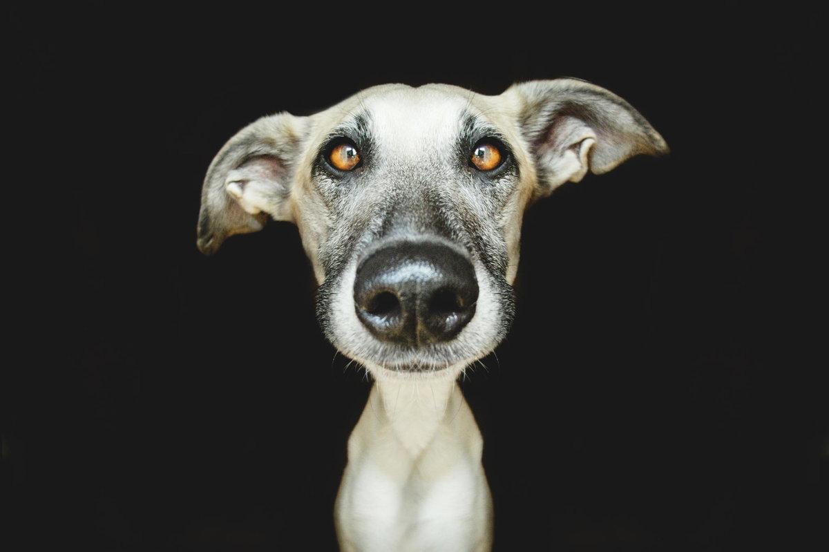 Цветами, картинка собак приколы