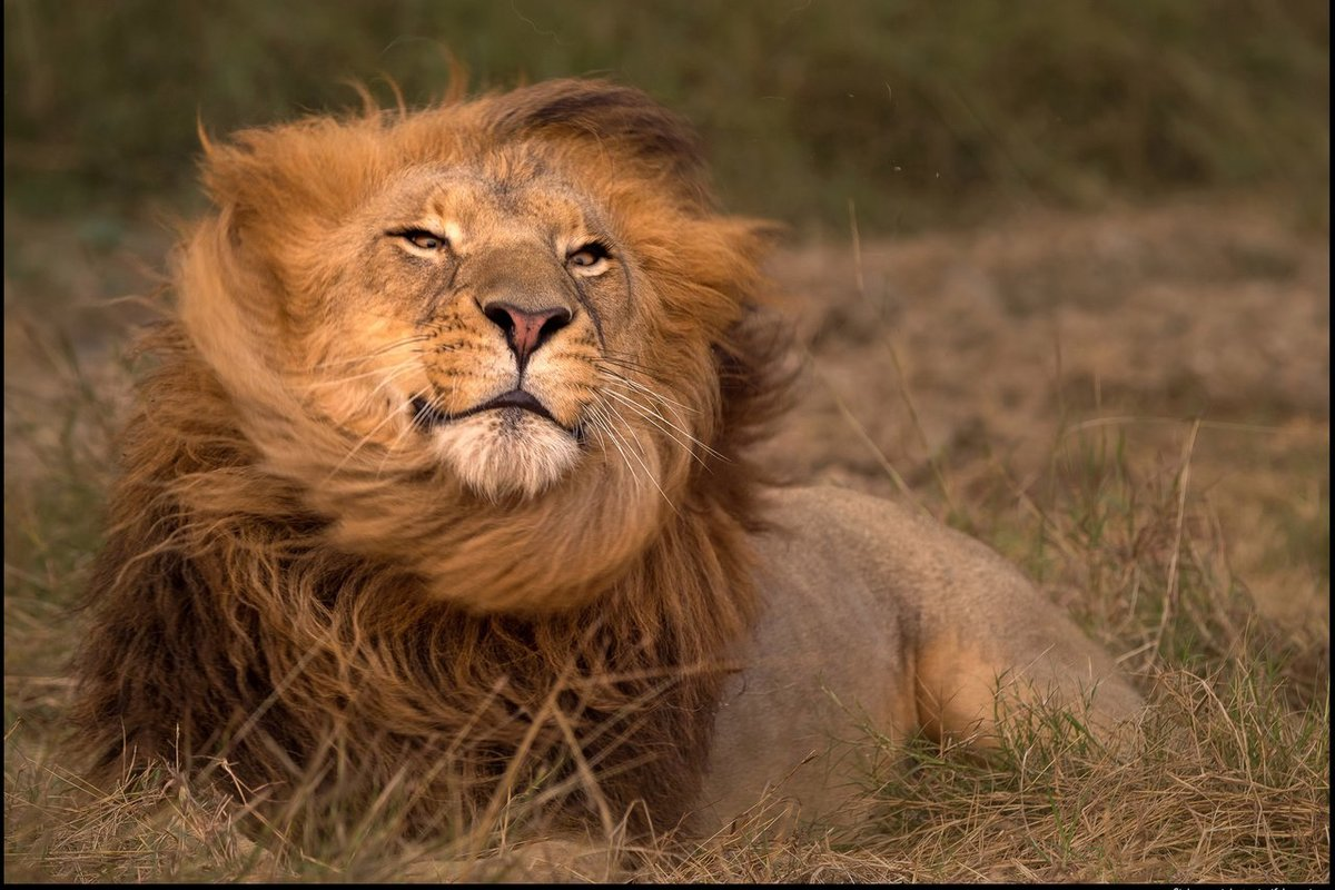 логотипом картинки про львов в африке помощью