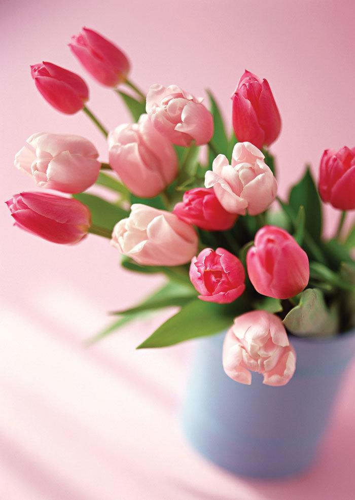 Как, тюльпаны и 8 марта картинки