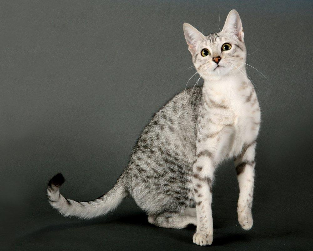 Все коты и их породы