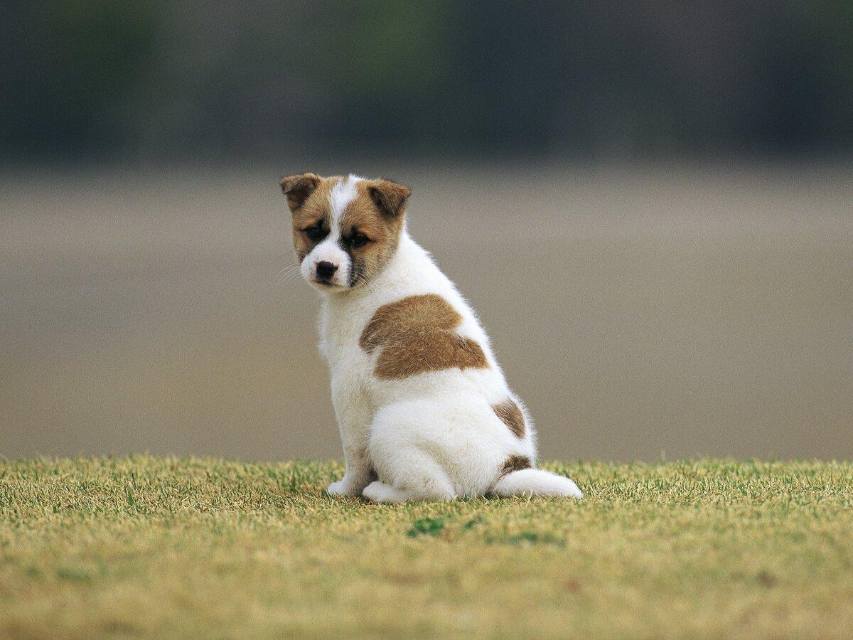 Картинки собак с зади
