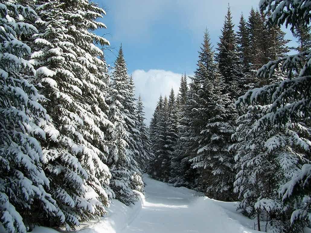 Зимний лес картинки сохранить