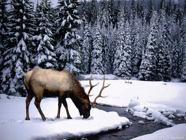 Лесные пейзажи. Карелия зимой