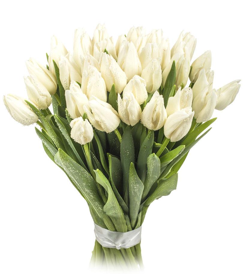 Свадебный букет с голландских тюльпанов купить, букет купить минск