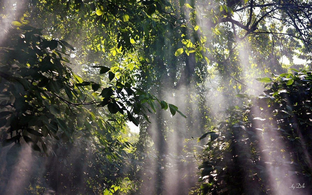 картинки на тему дождь в лесу стола как-будто