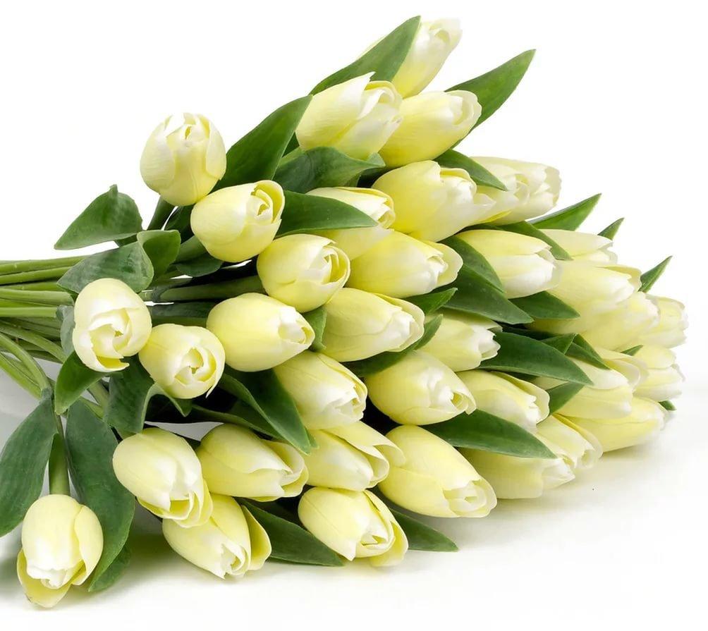 Поздравление днем, открытка с днем рождения с белыми тюльпанами