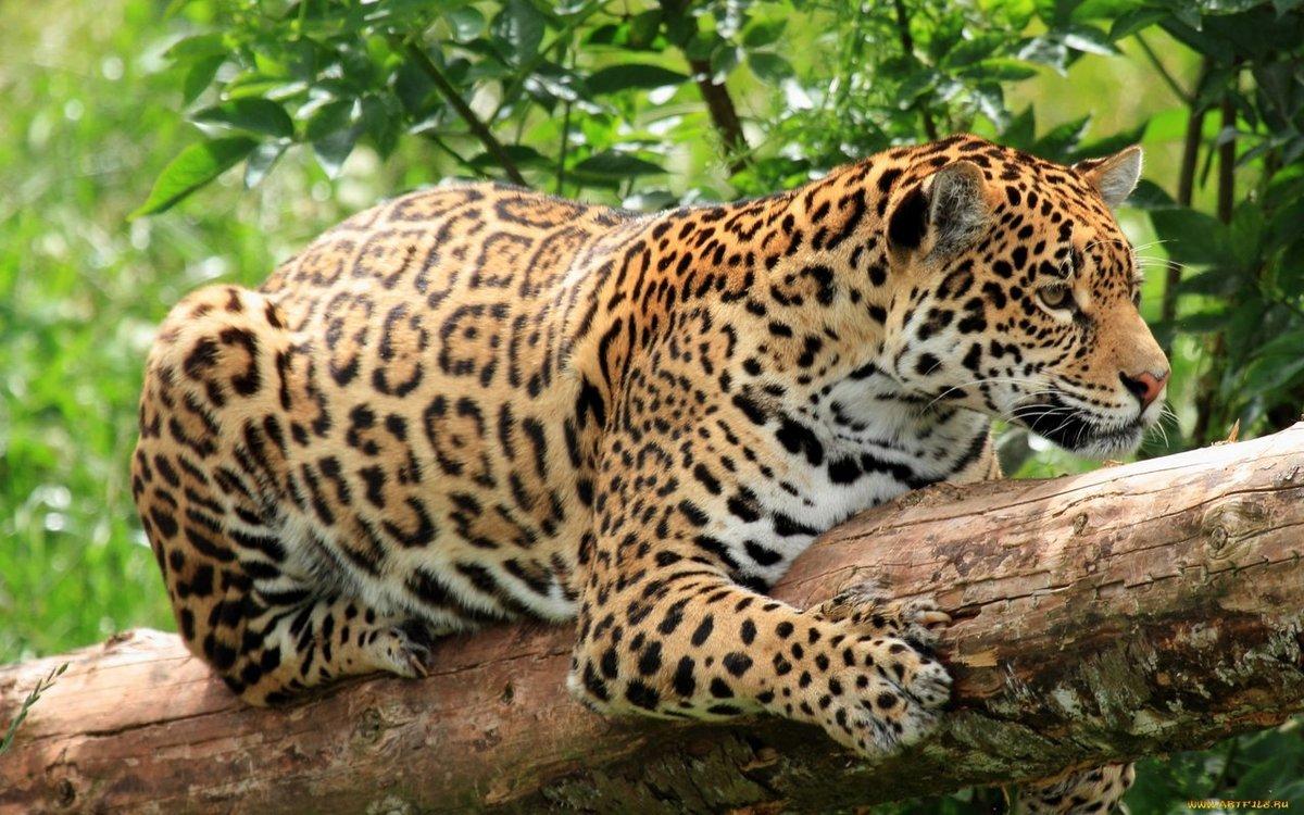 какие животные живут в тропическом лесу фото