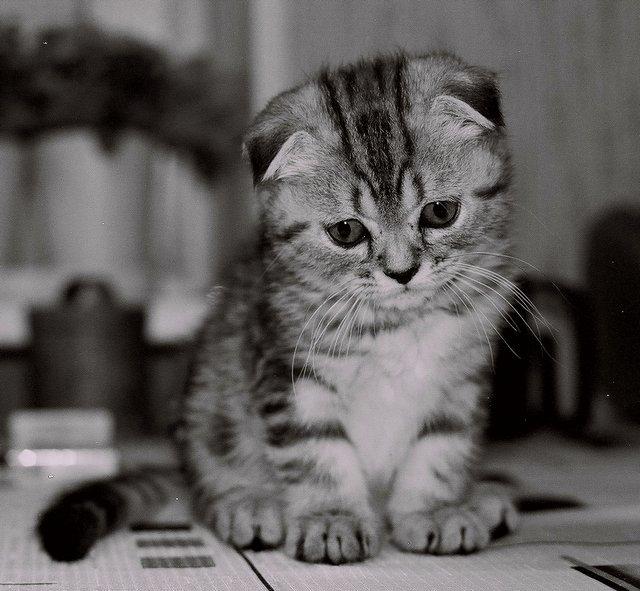 сети, картинки про грустного котенка это подействует