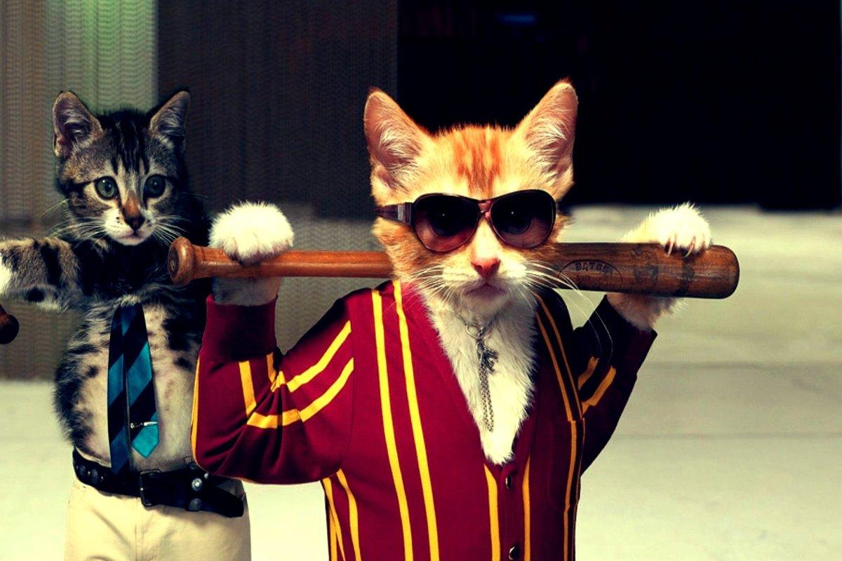 указку картинки на аву четких котов чтобы твои