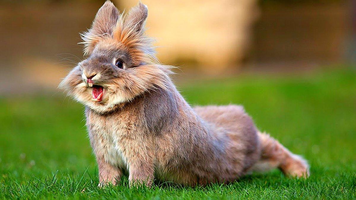 Картинки кролики и зайцы смешные, флорист