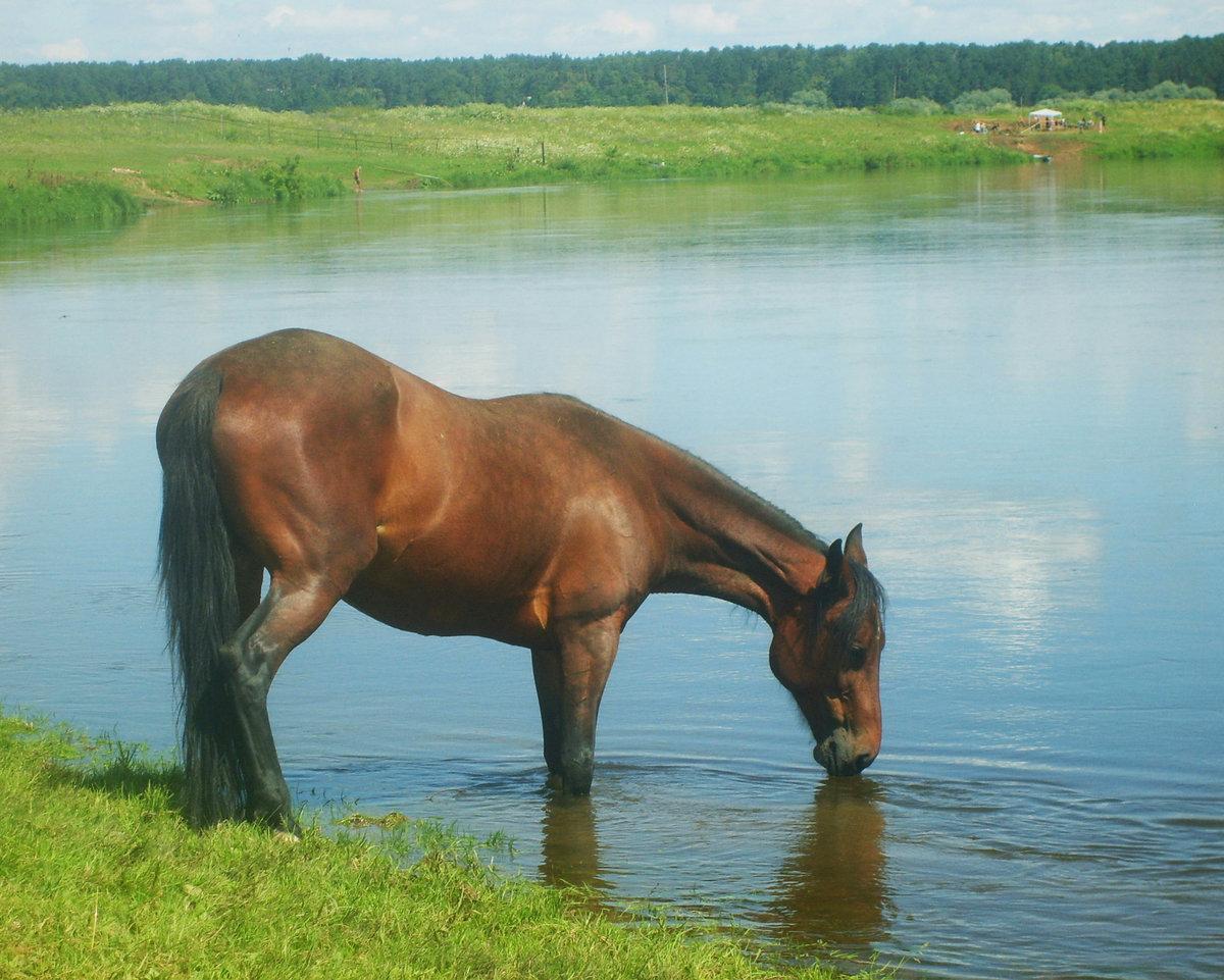 матчей озеро конь в картинках группе
