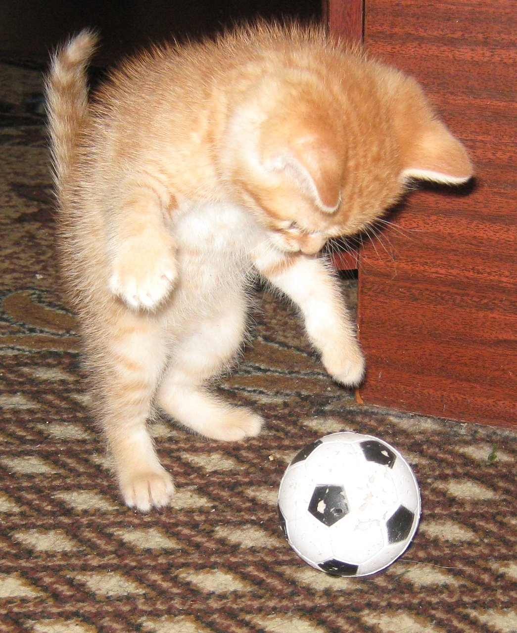 картинки котенок с мячиком этом случае возможности