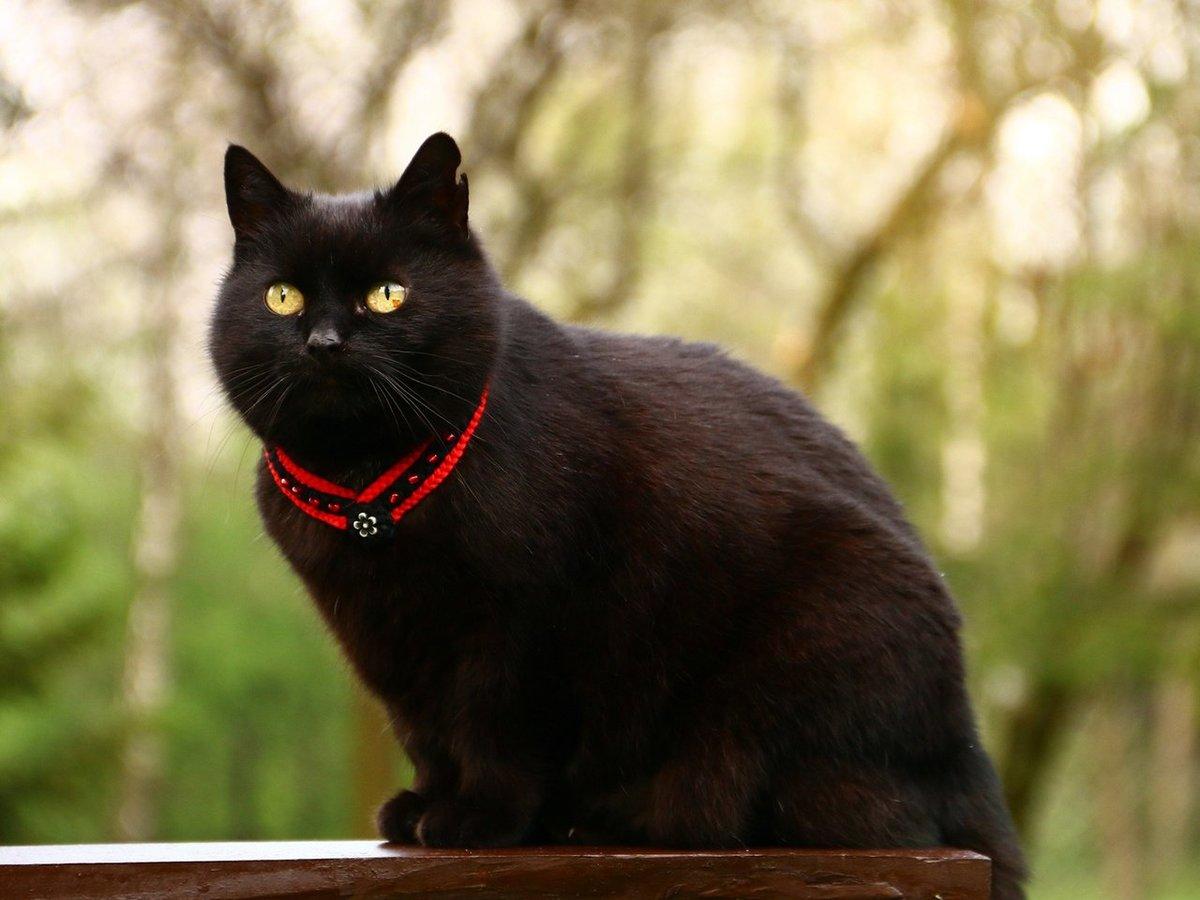 картинка чорного кота если