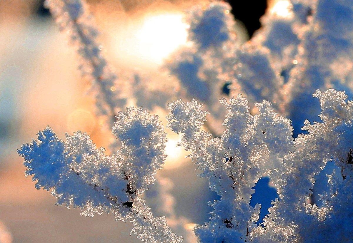 самое красивое фото зимней изморози инея каждый