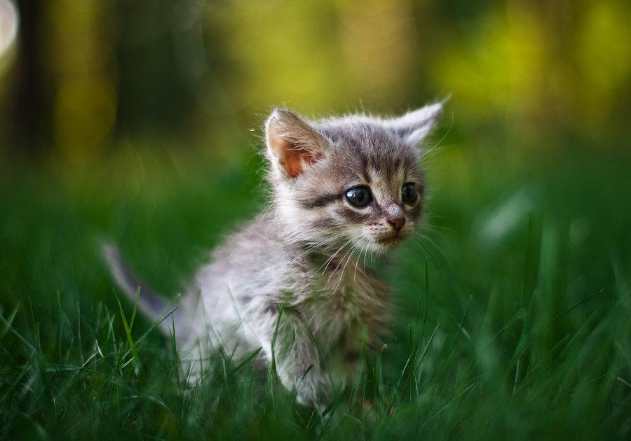 Картинки смешной котенок