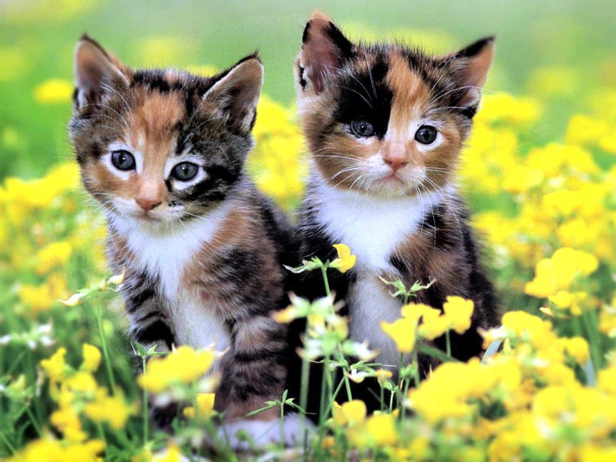 Картинки время, открытка с маленькими котятами
