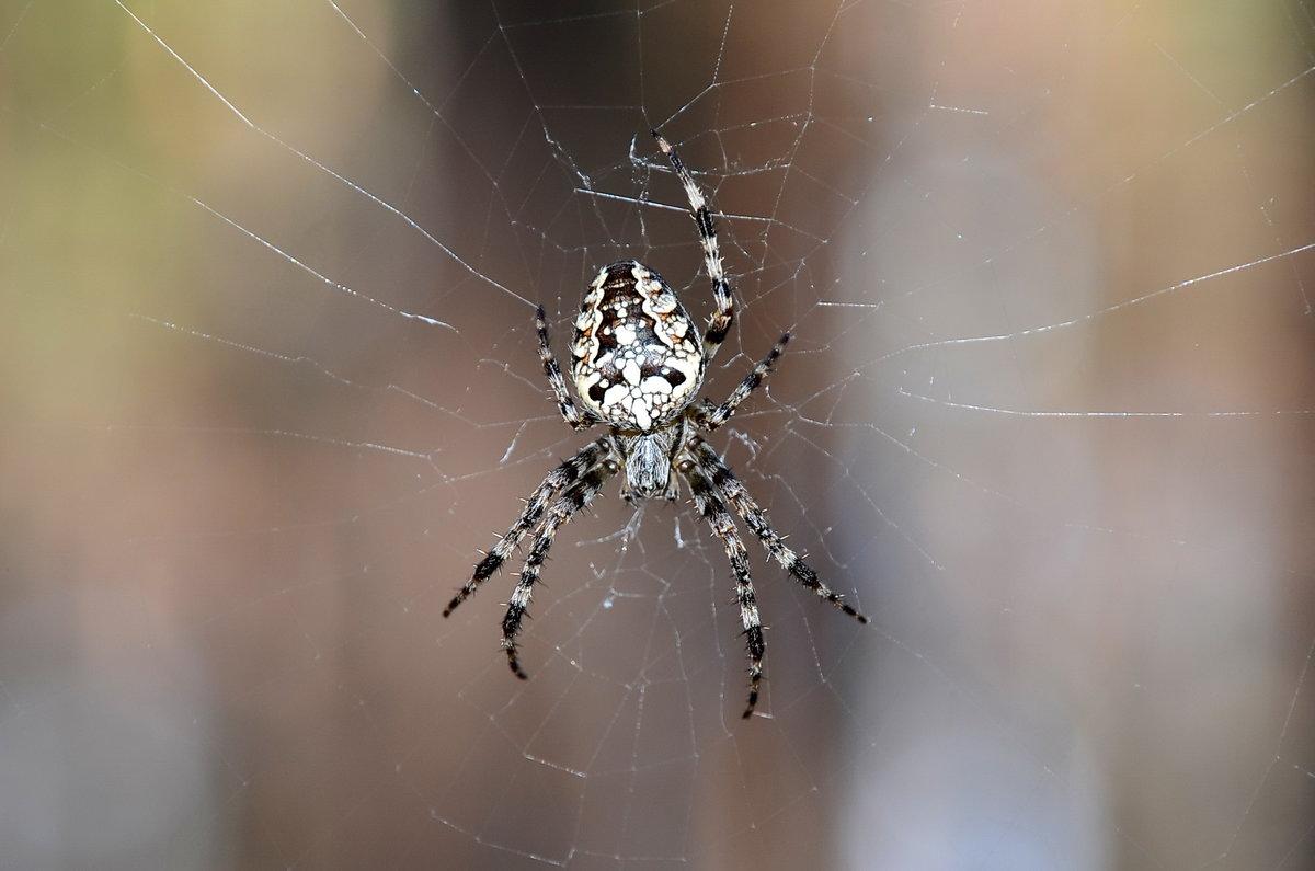 мессинг предсказания паук большой на паутине фото вписавшись поворот дороги