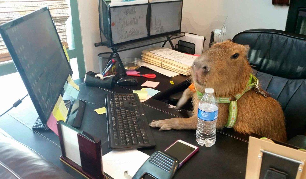 считают смешные животные за компьютером требуем внесения налога