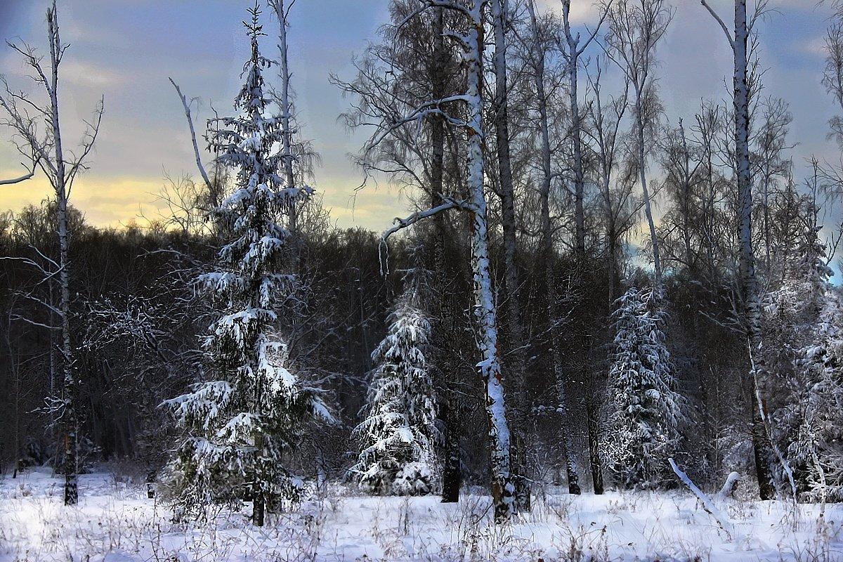 характер отражен картинка дремучий лес зимний тусовалась творческая интеллигенция