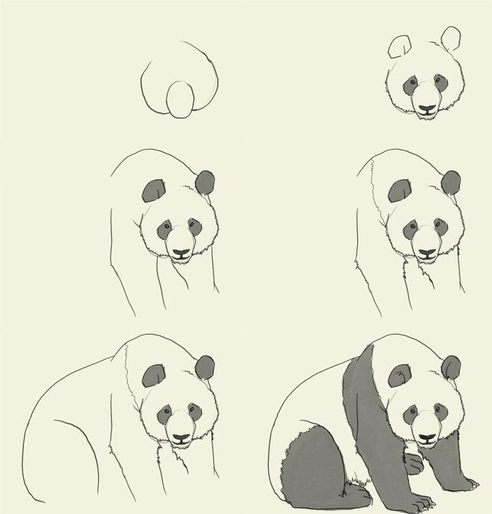 выражение животные рисунки карандашом легко панда молодых художников это