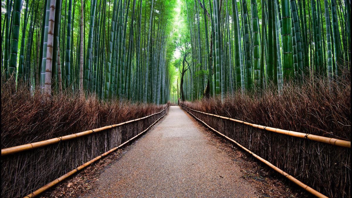 дорога, ограда, Лес бамбуковый